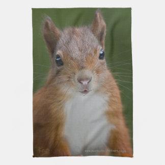 Thirsty Squirrel Kitchen Towel