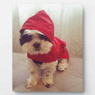 This dog hates rain plaque