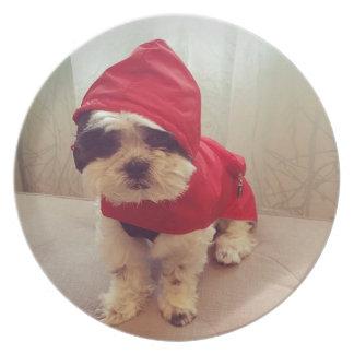 This dog hates rain plate