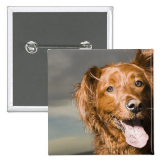 This dog is part golden retriever. 2 inch square button