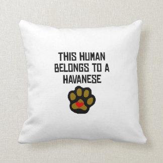 This Human Belongs To A Havanese Throw Pillows
