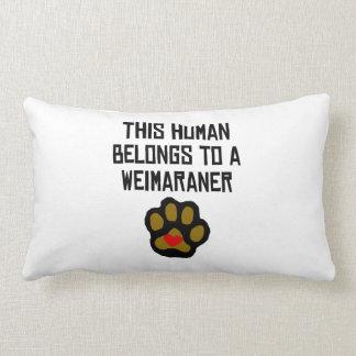 This Human Belongs To A Weimaraner Throw Pillows