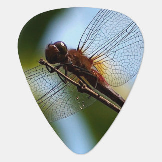 This is a guitar pick wtih a dragonfly