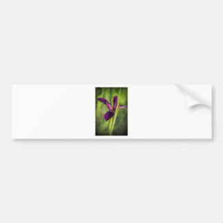 This is a Louisiana Gamecock Wildflower - Iris hex Bumper Sticker