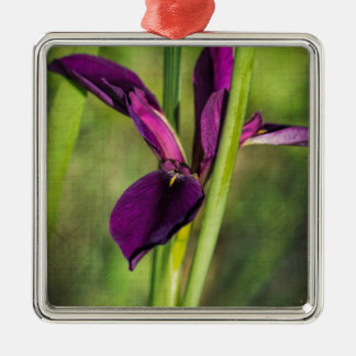 This is a Louisiana Gamecock Wildflower - Iris hex Silver-Colored Square Ornament