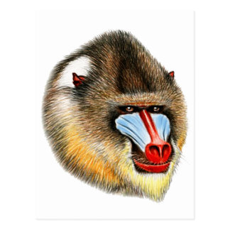 THIS IS MANDRILL POSTCARD