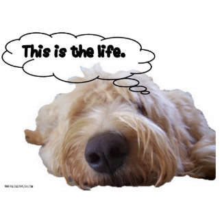 This is the life Goldendoodle dreaming Standing Photo Sculpture