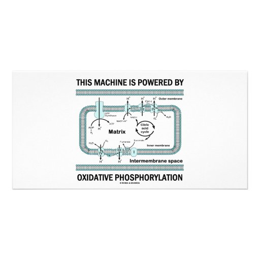 This Machine Powered By Oxidative Phosphorylation Picture Card