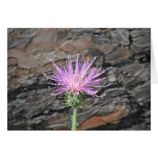 Thistle Bloom in Front of Fallen Tree Card