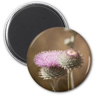 Thistle Blossom Magnet