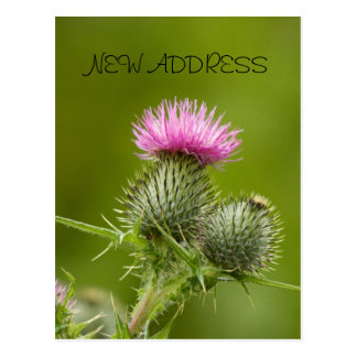 Thistle Flower New Address Card
