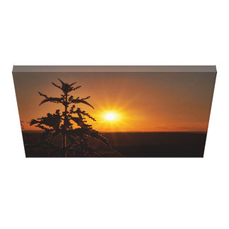 Thistle in front of a beautiful sunset canvas print