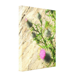 Thistle on Rock Canvas Print