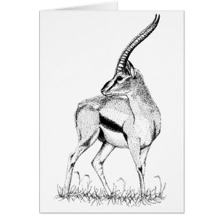 Thompson's Gazelle study Birthday Card