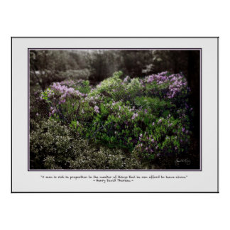 Thoreau Quote Poster - Sheep Laurel