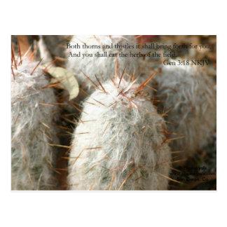Thorns Postcard