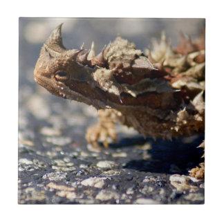 Thorny Devil Lizard, Outback Australia, Photo Ceramic Tiles