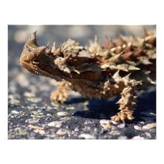 Thorny Devil Lizard, Outback Australia, Photo Letterhead Template