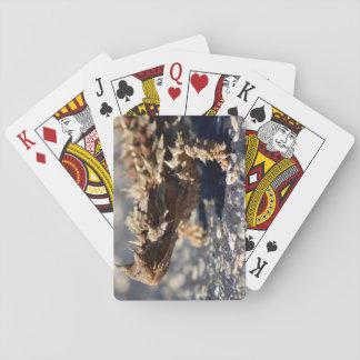 Thorny Devil Lizard, Outback Australia, Photo Poker Deck
