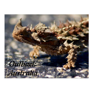 Thorny Devil Lizard, Outback Australia, Photo Postcard
