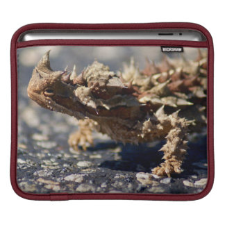 Thorny Devil Lizard, Outback Australia, Photo Sleeves For iPads
