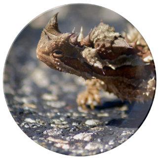 Thorny Devil Lizard, Outback Australia, Porcelain Porcelain Plates