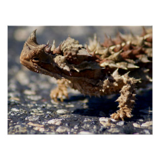 Thorny Devil Lizard Outback Australia, up to 24x18 Poster
