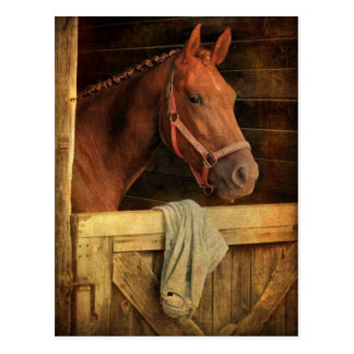 Thoroughbred Horse Postcard
