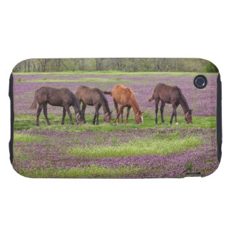 Thoroughbred horses in field of henbit flowers iPhone 3 tough cases