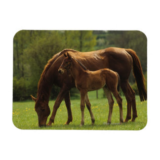 Thoroughbred Mare & Foal 2 Rectangular Photo Magnet