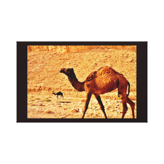 Thoughtful Camel Canvas Print