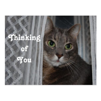 Thoughtful Cat Custom Photo Postcard