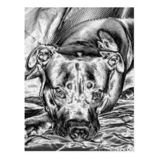 Thoughtful Pit Bull Post Card