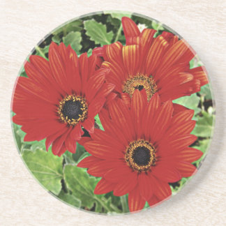Three as they bloom in red coaster