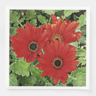 Three as they bloom in red disposable napkins