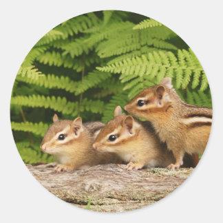 three baby chipmunks classic round sticker