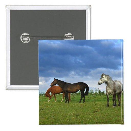 Three beautiful horses on sunny Summer day Pinback Button