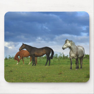 Three beautiful horses on sunny Summer day Mouse Mats