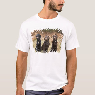 Three Black Labrador retrievers T-Shirt
