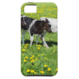 Three black white calves in meadow with dandelions iPhone 5 cover