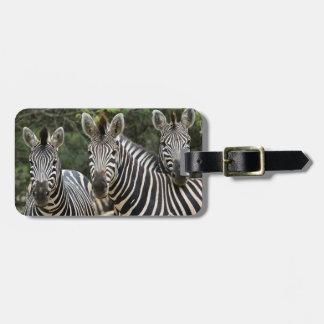 Three Burchell's Zebra (Equus Burchellii) Stand Luggage Tag