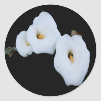 Three Calla Lilies Isolated On A Black Background Round Sticker