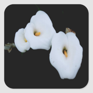 Three Calla Lilies Isolated On A Black Background Square Sticker
