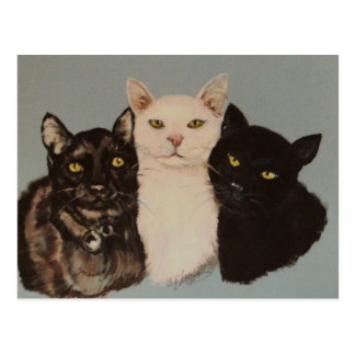 THREE CATS POSTCARD