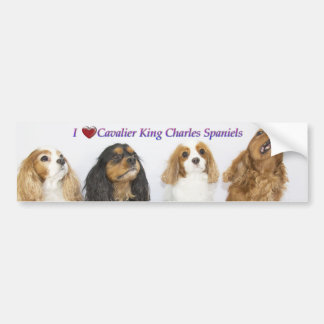 Three Colors of Cavalier King Charles Spaniels Bumper Sticker