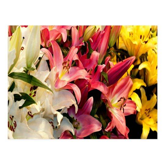 Three Coloured Lilies Postcard