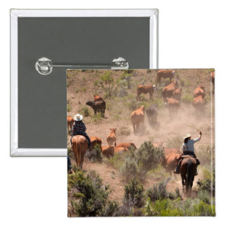 Three cowboys and cowgirls driving cattle 2 inch square button