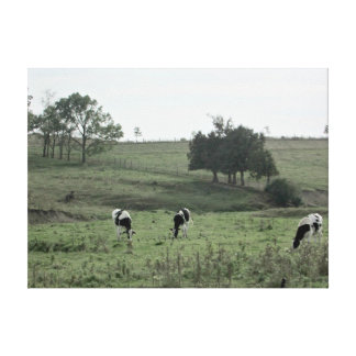 Three Cows in a Field  Photography Wall Art