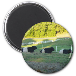 three cows magnet