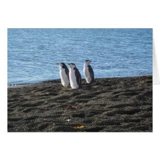 Three curious penguins card